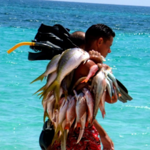 DiversWorld Fish Stringer